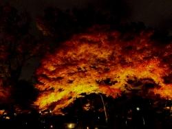20171201大田黒公園3