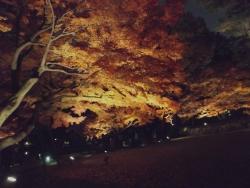20171201大田黒公園2
