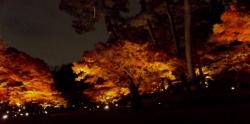 20171201大田黒公園8