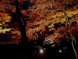 20171201大田黒公園4