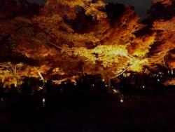 20171201大田黒公園5