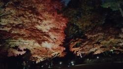 20171201大田黒公園10