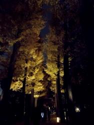 20171201大田黒公園9