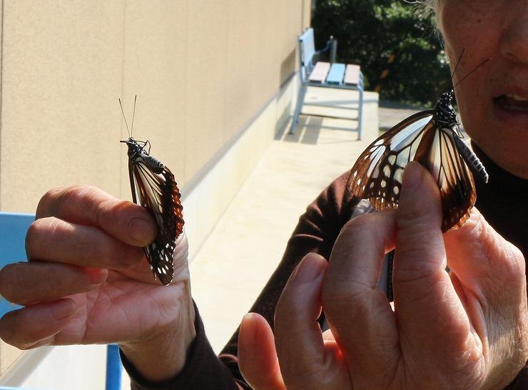 蝶々を捕まえちゃった! 29 10 25