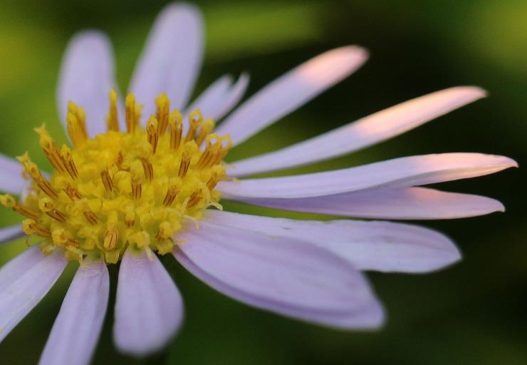 野菊の花 29 10 27