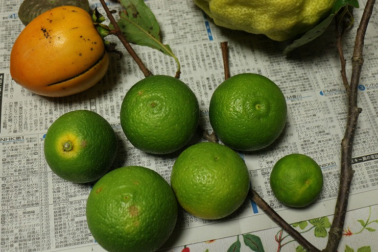 スダチより大きい蜜柑 柚子かな 29 10 27