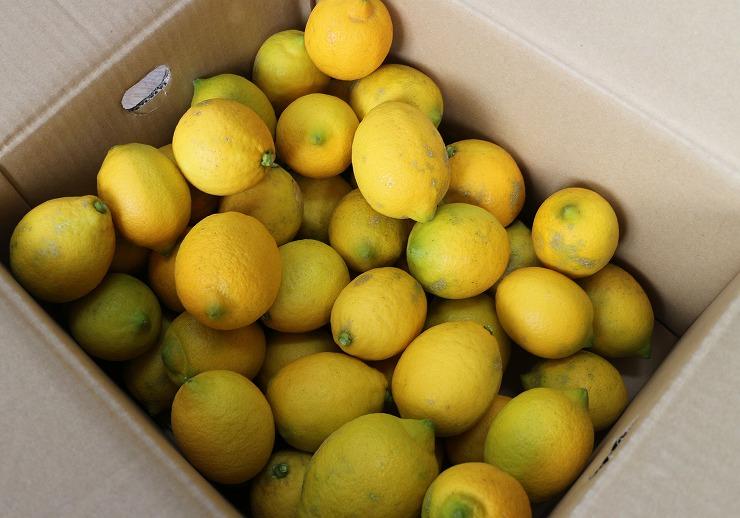 レモン菌の会の人から頂き 29 12 20