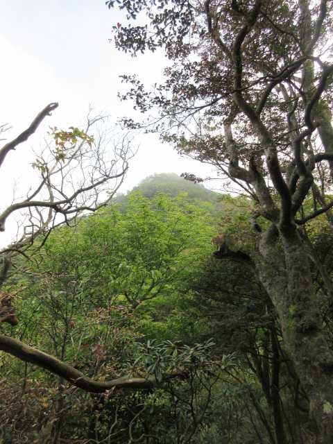 IMG2332JPG樹間に2の岳