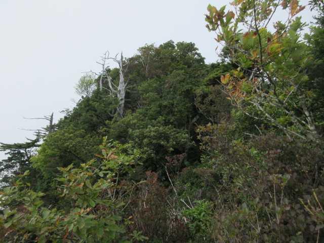 IMG2411JPG山頂部を見上げる