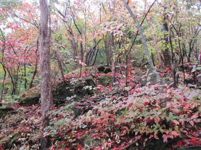 IMG2464JPG紅葉と落葉