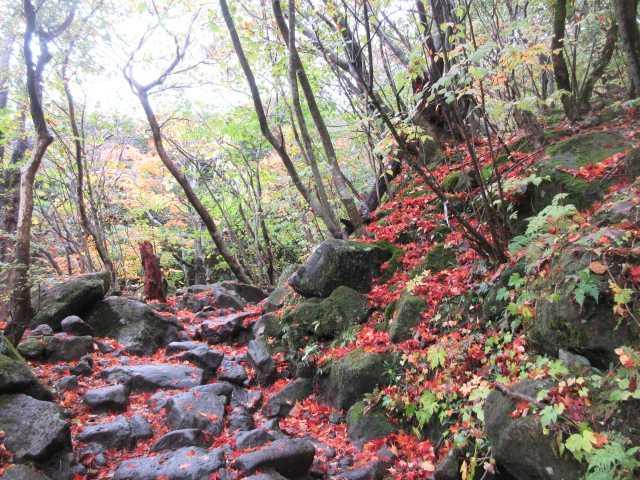 IMG2467JPG登山道の紅葉