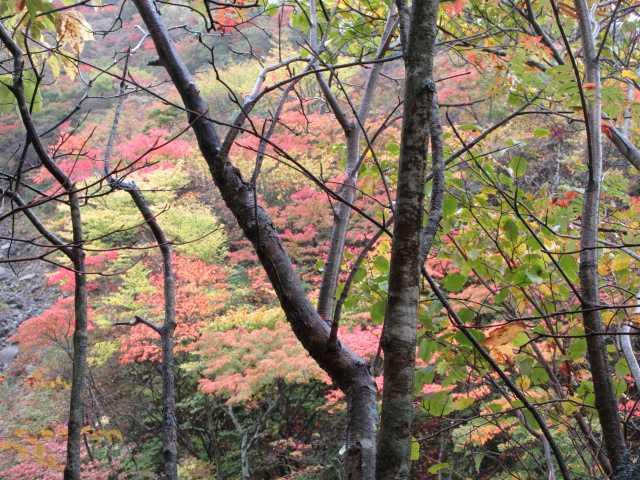 IMG2468JPG林の紅葉