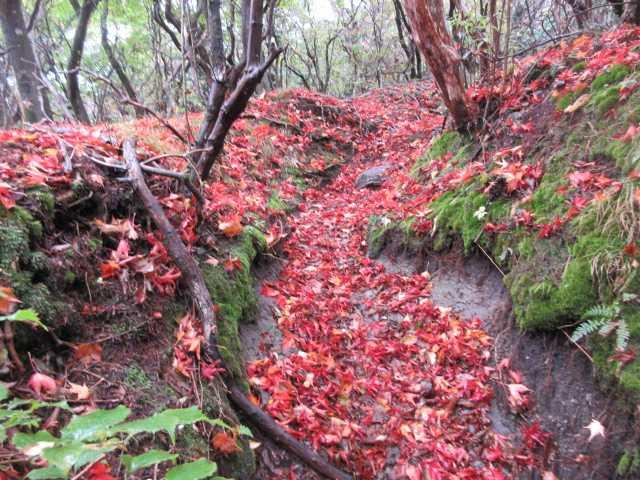 IMG2499JPG落葉の登山道