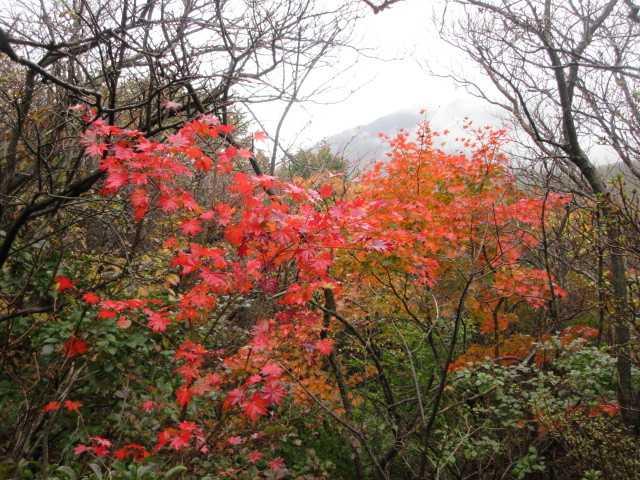 IMG2502JPG紅葉の登山道
