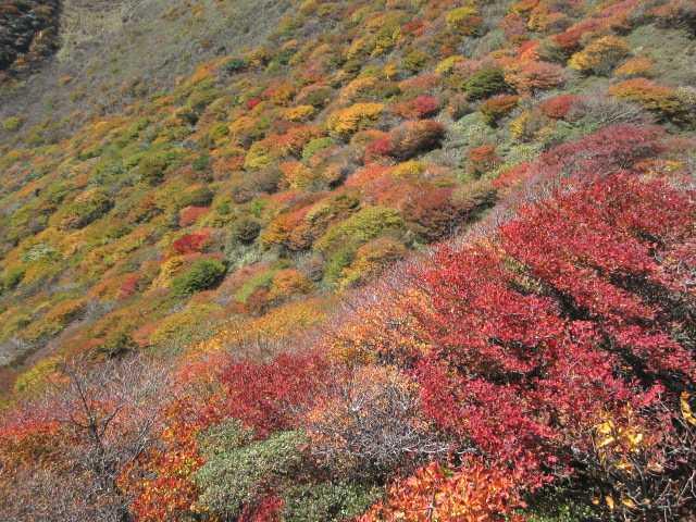 IMG2608JPG斜面の紅葉
