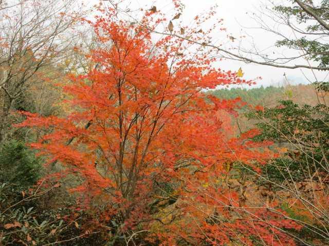 IMG2763JPG孤高の樹