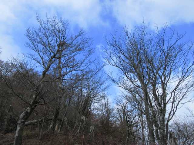 IMG2775JPG落葉の樹