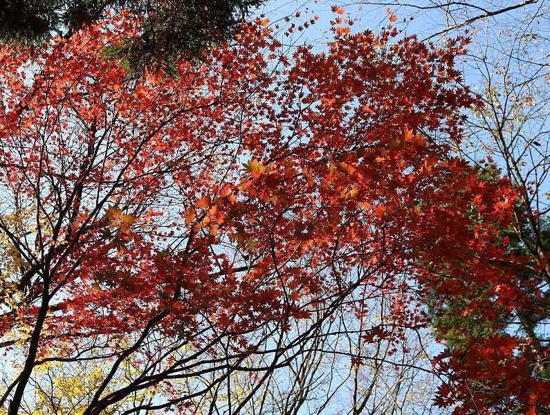 IMG5469JPG林道支線の紅葉1