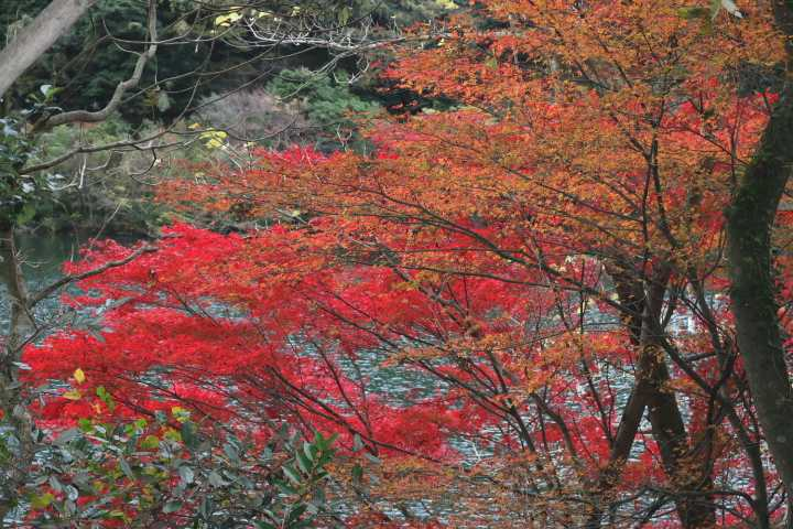 IMG5530JPG湖畔の紅葉
