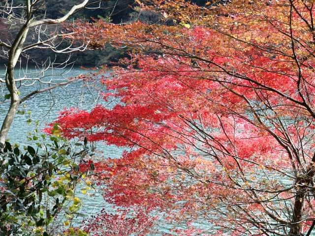 IMG5730JPG湖面の紅葉2
