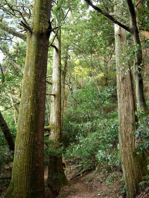 IMG5768JPG上宮下の大樹