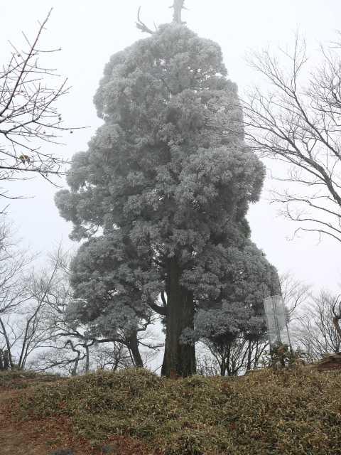 IMG5988JPG杉の霧氷