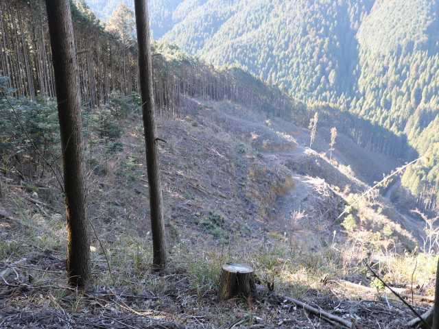 IMG6139JPG右手に伐採地が見え出した