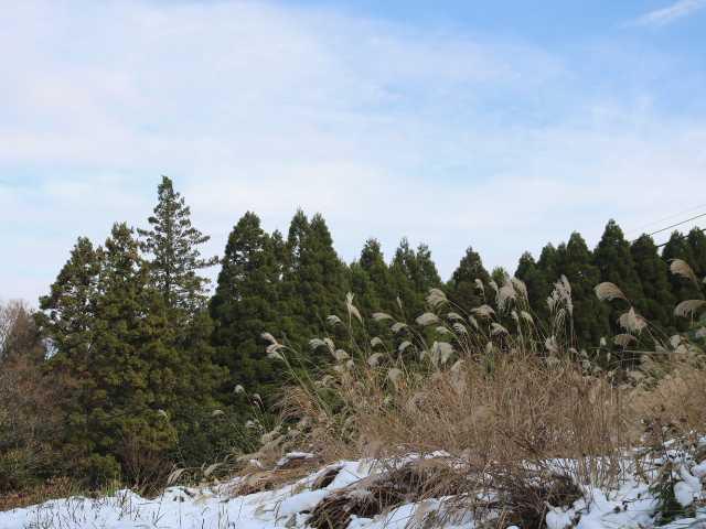 IMG6189JPG雪の森