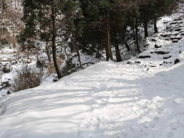 IMG6209JPG新雪が美しい