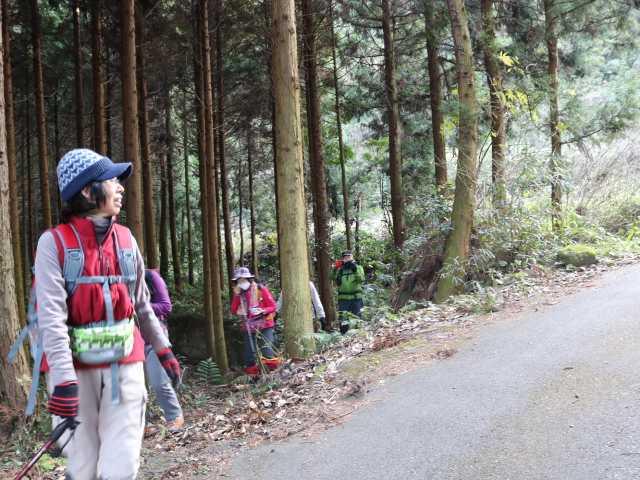 IMG6554JPG杉林を抜け参拝道付近に下山