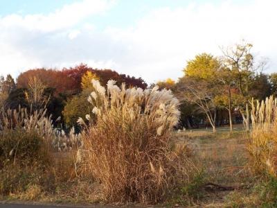 朝霞の森秋の訪れ