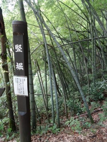 5竪堀 (900x1200)
