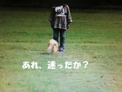 CIMG6401-1_convert_20171008222831.jpg