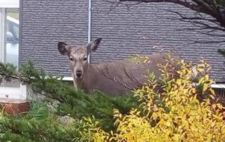 鹿(拡大)