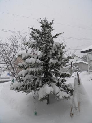 クリスマスツリー5
