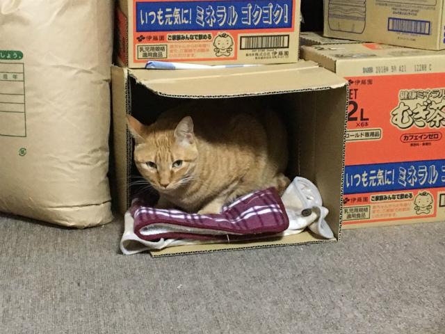 fukuchann0010.jpg