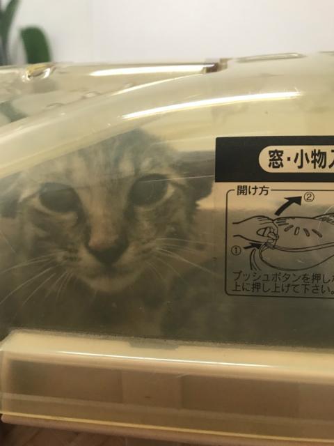 himawari0034.jpg