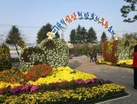 百済 益山 菊祭り