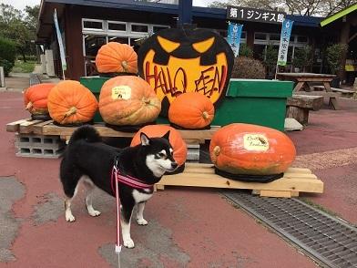 2017-10那須かぼちゃ