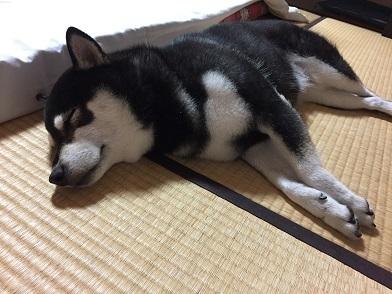 2017-8坂本の湯 寝姿