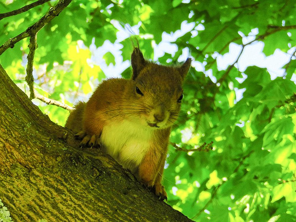 フィンランド 庭 リス りす Squirrel Orava ウィンク かわいい Cute söpö