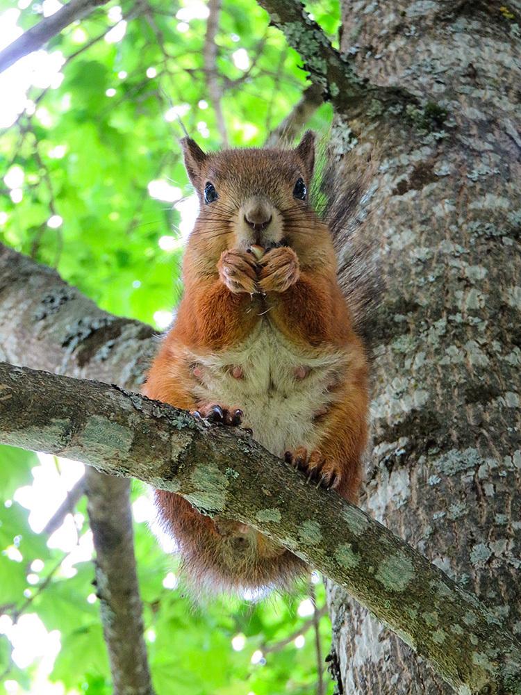 フィンランド 庭 リス Squirrel Orava かわいい Cute söpö