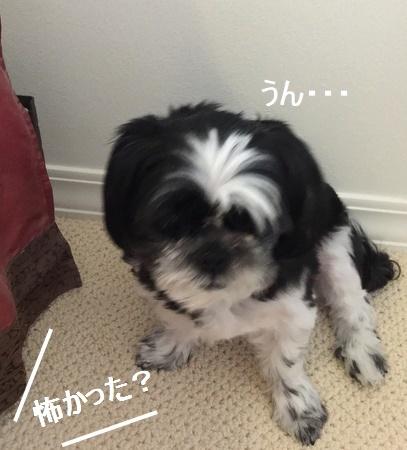 IMG_9629moji.jpg