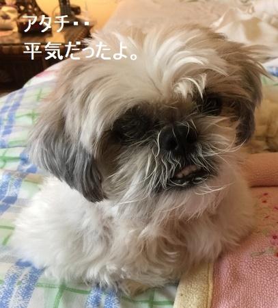 IMG_9631moji.jpg