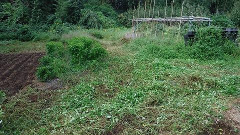 2017.9.30菜園②2