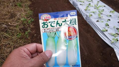 2017.10.1菜園8