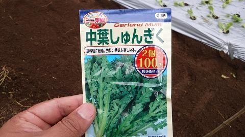 2017.10.1菜園10