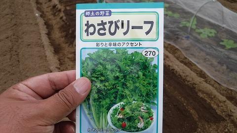 2017.10.1菜園②5