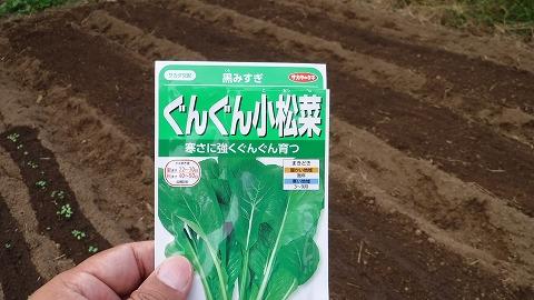2017.10.14菜園14