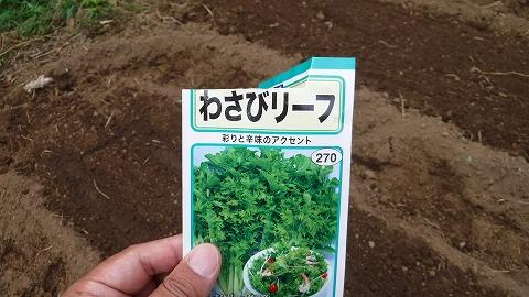 2017.10.14菜園22